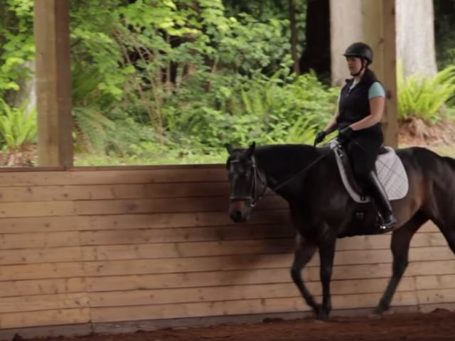 horse exercise 1