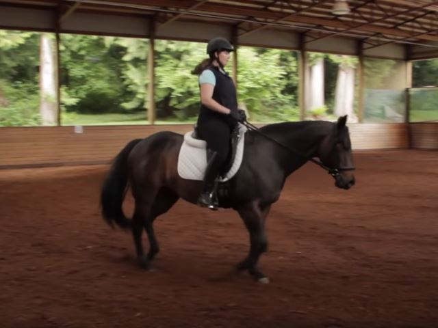 horse exercise 2